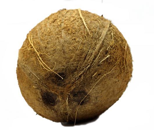 Coco seco 500g - Imagem em destaque